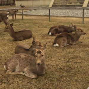 鹿さん達🦌