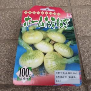 玉葱の球根
