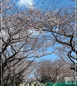 春ですね。新たな気持ちで新年度を。