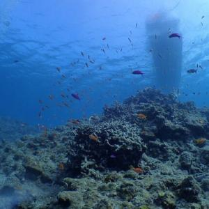 もう12月☆やや荒れ気味の海でした