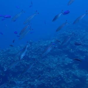 台風前にウミガメ達と遭遇~♫