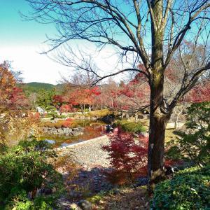11月15日、三年ぶりに桜山公園へ