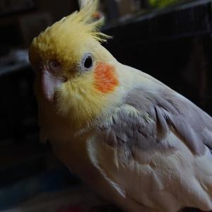 いつも可愛い鳥さん達