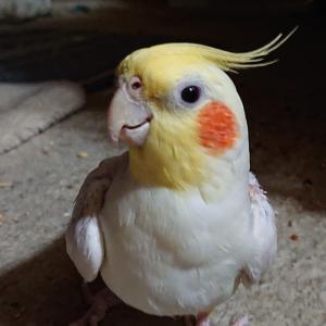 美味しい物食べて 鳥さん達と遊んで