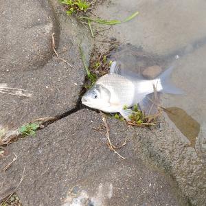 多摩川  No88