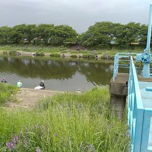びん沼川、砂塚橋下流南岸 No2