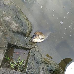 多摩川  No99