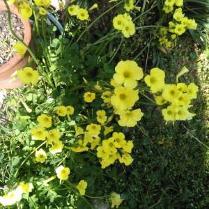 アトリエの春