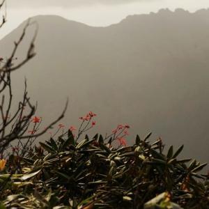 散り残る紅葉と慰霊碑と