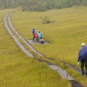 GOTO尾瀬 裏燧林道の湿原とブナの林