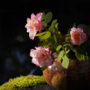 バラが咲いた バラが咲いた バラが咲いた