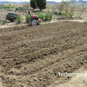 レタスなど種蒔、耕うん
