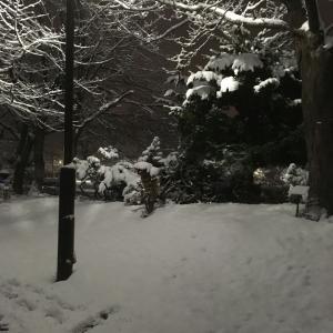 嵐もこの雪に驚いたかな?