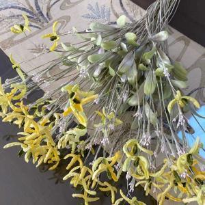 ペケポンの花
