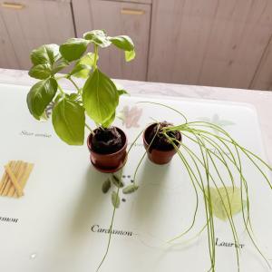 プチ菜園✨植え替えてみた!