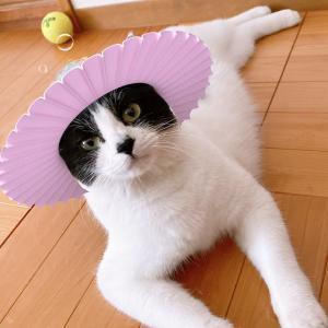 今日は猫の日 ねこだいすき