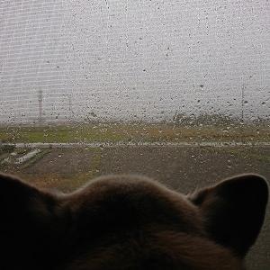 「#犬をしまえ」超大型台風から命を守って