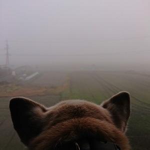 濃霧とわんわんわんこの日