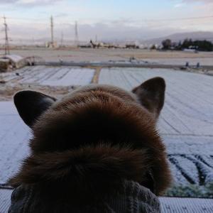 雪が降り~ジジ色コーデ