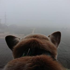 肝を冷やした霧の朝