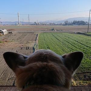今朝のCooと見守りカメラ