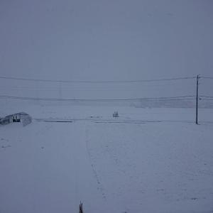 雪でワホね