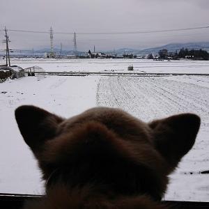 今日は休みを取りました。Coo、お医者の前に雪遊び