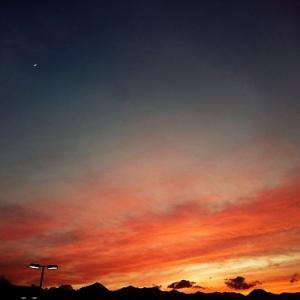 昨日の夕焼けと今朝のCoo。