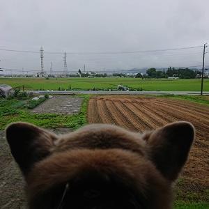 雨の土曜日、水の恐怖。