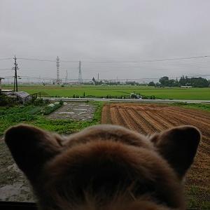 雨はつまんないな