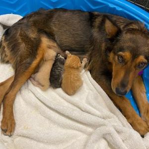 子どもを失い憔悴していた母犬、身寄りのない3匹の子猫と出会って…。