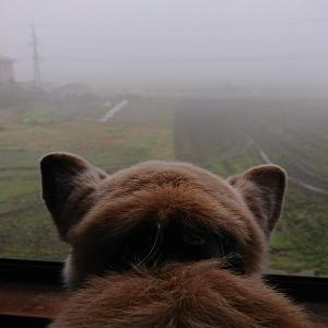 濃霧ノムコウ