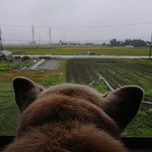 Cooはリアル耳デカ(笑)と、本日長野市でお仕事なり。