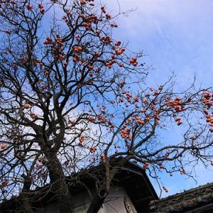 落ち葉と遊ぼう!大銀杏の木