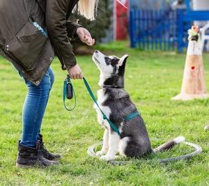 躾の話「罰を使うトレーニングが犬の及ぼす悪影響」