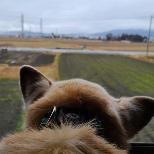 雨じゃんね。。そして、もうどう犬エルくん。