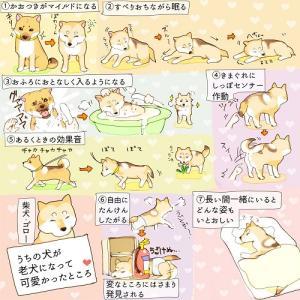 「うちの犬が老犬になって可愛かった、7つのこと」