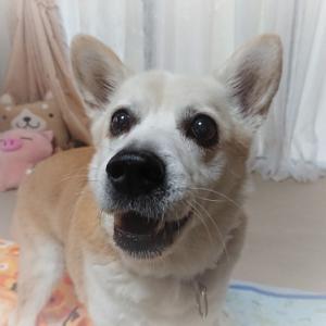 ディサービスの癒し犬は保護犬でした。