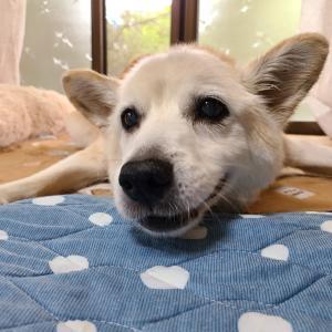 「感謝すればいい」笑う犬との生活Part17