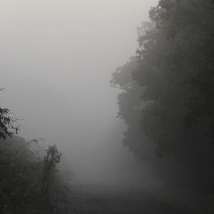 霧の朝に鳥たちは・・・