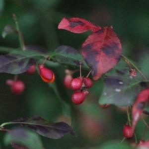 赤やピンクに色づく木々・・イヌショウマも