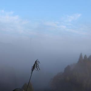 山をおおう霧の朝・・・