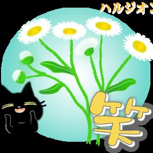 キンポウゲって謎ニャ?&塩レモンクリームシュー☆