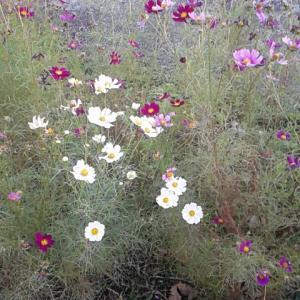 秋の花だよ~。(=⌒▽⌒=)