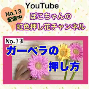 YouTube  ★押し花★ ガーベラの押し方