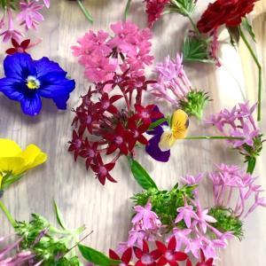 お庭の花たちを押し花にしましょう(*^o^*)