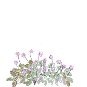 109日生まれの誕生花   ヒメツルバ