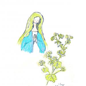 10月27日の誕生花 アルケミラモーリス あの日のこと決して忘れていません