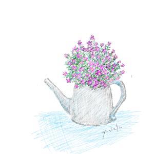 11月3日の誕生花 ボロニア いつまでもお幸せにね