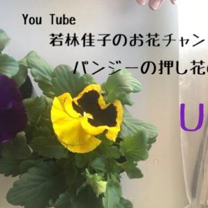 【動画レッスン】パンジーの押し花の作り方